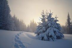 Paisaje hermoso de la Navidad imagen de archivo libre de regalías