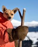 Paisaje hermoso de la Navidad con los perritos lindos en un costu de Papá Noel foto de archivo libre de regalías