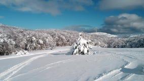 Paisaje hermoso de la nieve panorama de los árboles del invierno tiro Paisaje del invierno con las altas piceas y nieve en montañ metrajes