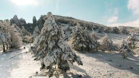 Paisaje hermoso de la nieve panorama de los ?rboles del invierno tiro Paisaje del invierno con las altas piceas y nieve en monta? almacen de metraje de vídeo