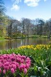 Paisaje hermoso de la primavera con flores y un lago en el parkKe Imágenes de archivo libres de regalías
