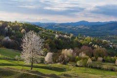 Paisaje hermoso de la primavera con los árboles del flor Fotografía de archivo
