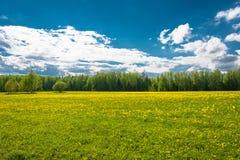 Paisaje hermoso de la primavera con los campos amarillos de dientes de león Fotografía de archivo