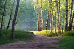 Paisaje hermoso de la primavera con un birchwood Fotografía de archivo libre de regalías