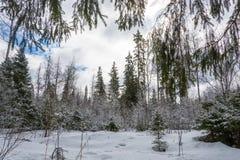 Paisaje hermoso de la primavera después de una nieve Fotografía de archivo