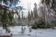 Paisaje hermoso de la primavera después de una nieve Fotografía de archivo libre de regalías