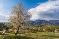 Paisaje hermoso de la primavera en las colinas de las montañas cárpatas Imagenes de archivo