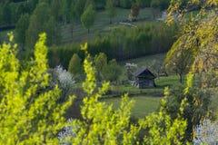 Paisaje hermoso de la primavera en las colinas de las montañas cárpatas Foto de archivo libre de regalías