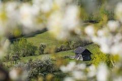 Paisaje hermoso de la primavera en las colinas de las montañas cárpatas Foto de archivo