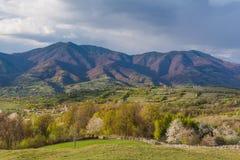 Paisaje hermoso de la primavera en las colinas de las montañas cárpatas Imágenes de archivo libres de regalías