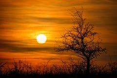 Paisaje hermoso de la puesta del sol con el árbol fotos de archivo libres de regalías