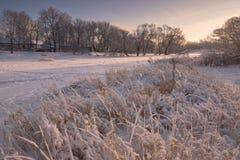 Paisaje hermoso de la tarde del invierno con una charca congelada nevada, la caña con escarcha y las casas Tarde del invierno en  Fotos de archivo libres de regalías