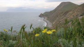 Paisaje hermoso de las flores amarillas que se sacuden en el viento en una ladera por el mar almacen de video
