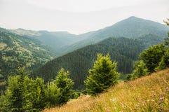 Paisaje hermoso de las montañas de Karpathian Fotografía de archivo