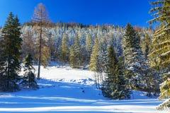 Paisaje hermoso de las montañas de Tatra en el invierno nevoso, Imagen de archivo libre de regalías