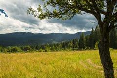 Paisaje hermoso de las montañas en cárpato Cielo azul hermoso y roca altos para arriba en montañas cárpatas Foto de archivo