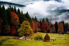Paisaje hermoso de Rumania, otoño en Bucovina con el pastor imágenes de archivo libres de regalías