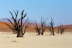 Paisaje hermoso de Sossusvlei de Death Valley, Namibia Foto de archivo libre de regalías