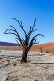 Paisaje hermoso de Sossusvlei de Death Valley, Namibia Fotografía de archivo libre de regalías
