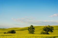 Paisaje hermoso de Toscana Foto de archivo