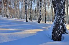 Paisaje hermoso de un bosque del invierno en la puesta del sol Foto de archivo libre de regalías