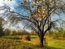 Paisaje hermoso de un día del peacefull en el pueblo Prahova-Rumania del país en tiempo del otoño fotografía de archivo libre de regalías