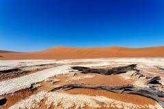 Paisaje hermoso de Vlei ocultado en el desierto de Namib Foto de archivo libre de regalías