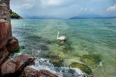 Paisaje hermoso del agua con un cisne en Sirmione en el lago Garda, Italia En un día de verano soleado foto de archivo