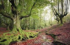 Paisaje hermoso del bosque Foto de archivo libre de regalías