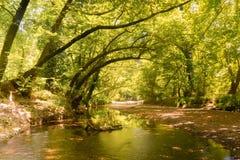 Paisaje hermoso del bosque de Prokopi en Euboea en Grecia Fotos de archivo
