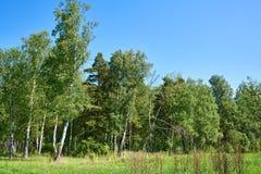 Paisaje hermoso del bosque en día de verano Fotografía de archivo