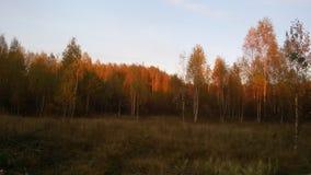 Paisaje hermoso del bosque en el sol poniente Fotografía de archivo