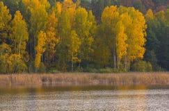 Paisaje hermoso del bosque otoñal cerca del lago Fotos de archivo libres de regalías