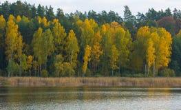 Paisaje hermoso del bosque otoñal cerca del lago Foto de archivo