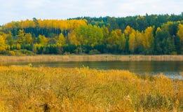 Paisaje hermoso del bosque otoñal cerca del lago Foto de archivo libre de regalías