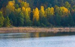 Paisaje hermoso del bosque otoñal cerca del lago Imagen de archivo