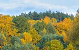 Paisaje hermoso del bosque otoñal cerca del lago Fotografía de archivo