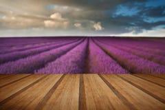 Paisaje hermoso del campo de la lavanda con el cielo dramático con de madera Fotografía de archivo libre de regalías
