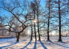 Paisaje hermoso del invierno Foto de archivo libre de regalías