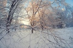 Paisaje hermoso del invierno, bosque nevoso en un día soleado, distorsión del ojo de pescados, árboles nevosos altos con un cielo imagen de archivo