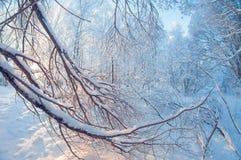 Paisaje hermoso del invierno, bosque nevoso en un día soleado, distorsión del ojo de pescados, árboles nevosos altos con un cielo imagenes de archivo