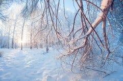 Paisaje hermoso del invierno, bosque nevoso en un día soleado, distorsión del ojo de pescados, árboles nevosos altos con un cielo fotos de archivo