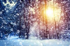 Paisaje hermoso del invierno con el bosque, los árboles y la salida del sol winterly mañana de un nuevo día Paisaje de la Navidad imagen de archivo