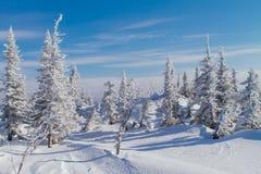 Paisaje hermoso del invierno con los árboles Fotos de archivo libres de regalías