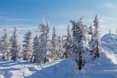 Paisaje hermoso del invierno con los árboles Fotografía de archivo libre de regalías