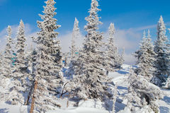 Paisaje hermoso del invierno con los árboles Imagen de archivo libre de regalías