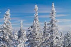 Paisaje hermoso del invierno con los árboles Foto de archivo libre de regalías