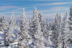 Paisaje hermoso del invierno con los árboles Foto de archivo
