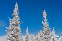 Paisaje hermoso del invierno con los árboles Fotos de archivo