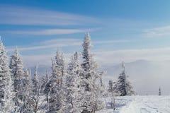 Paisaje hermoso del invierno con los árboles Imágenes de archivo libres de regalías